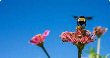 蜜蜂落在花上